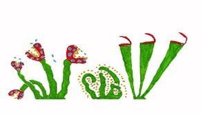Que mangent les plantes carnivores ?