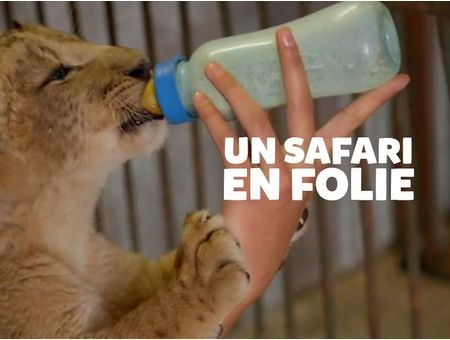 SAFARI EN FOLIE (UN)