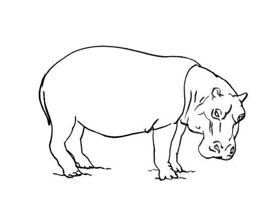 Hippopotame Dessin Colorier Les Enfants Marnfozine Com