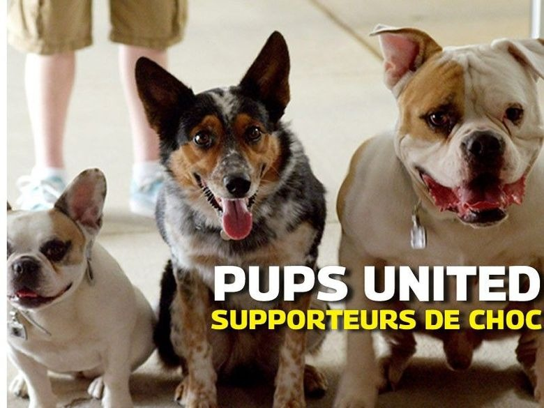 Pups united: supporters de choc en streaming