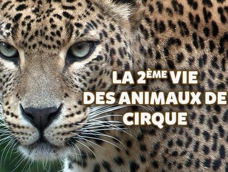 La 2ème vie des animaux de cirque