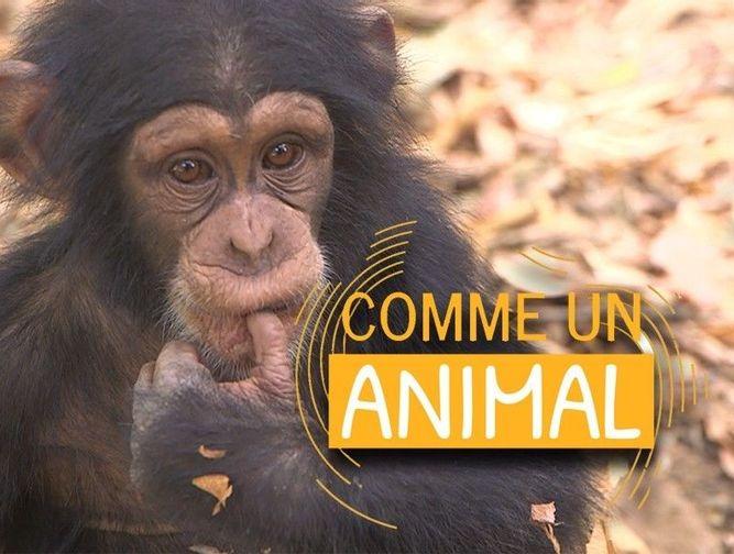 Elie Semoun comme un chimpanzé